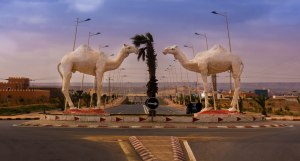Tan-tan Camels