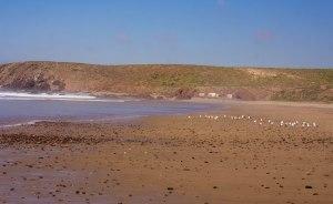 Erkounte beach