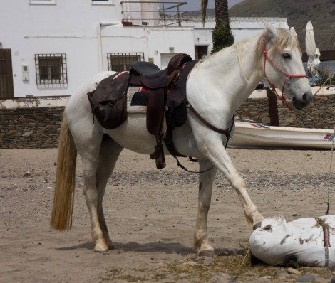 The one horse of Las Negras